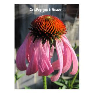 Pink and orange Daisey Postcard