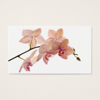 Pink and Peach Dendrobium Orchid - Customized Business Card
