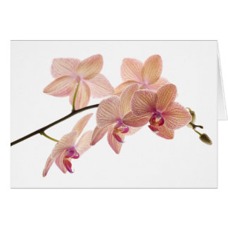 Pink and Peach Dendrobium Orchid - Customized Card