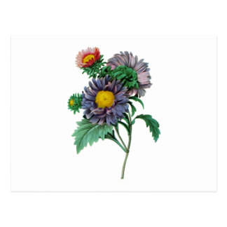 Pink and Purple Aster by Pierre-Joseph Redouté Postcard