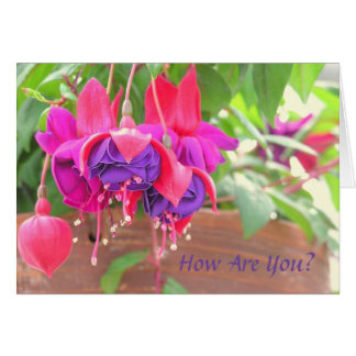 PINK AND PURPLE FUCHSIA CASCADING FROM CLAY POT CARD