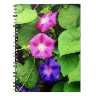 Pink and Purple Morning Glories Spiral Note Books