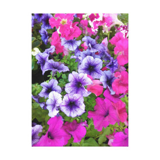 Pink and Purple Petunia Blossom Canvas Print