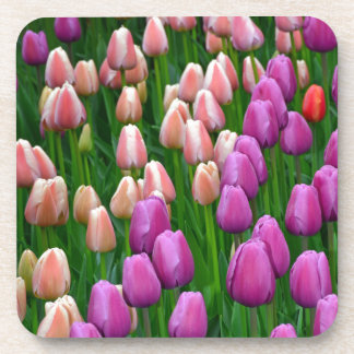 Pink and purple spring tulips beverage coaster