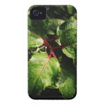 Pink and rain and green iPhone 4 covers