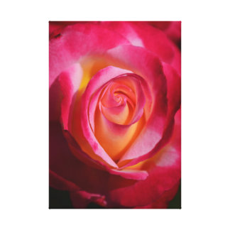 Pink and Red Rose with Yellow Highlights Canvas Print