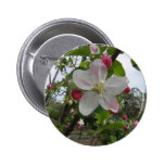 Pink and White Apple Blossoms Buttons