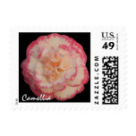 Pink and White Camellia Stamp