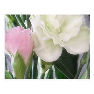 Pink and White Carnations 2 Postcard