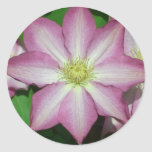 Pink and White Clematis Spring Flower Classic Round Sticker