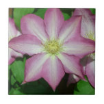 Pink and White Clematis Spring Flower Tile