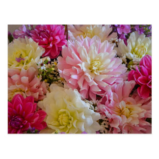 Pink and white dahlia flowers postcard