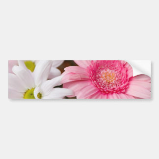 Pink and White Daisies Car Bumper Sticker