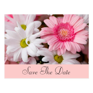Pink and White Daisies Postcard