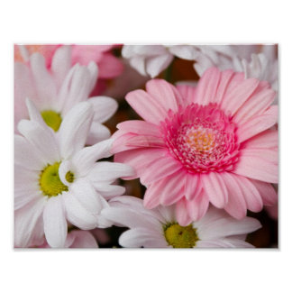 Pink and White Daisies Poster