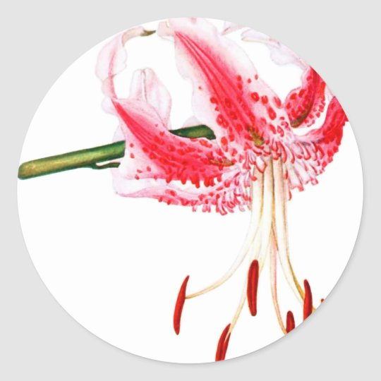 Pink and White Daylily Classic Round Sticker