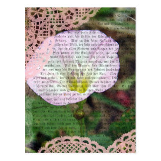 Pink and White Field BindWeed Postcard