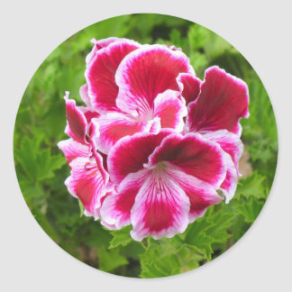 pink and white flower classic round sticker