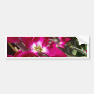 PINK AND WHITE FLOWER IN SPRING BUMPER STICKER