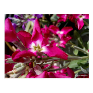 PINK AND WHITE FLOWER IN SPRING POSTCARD
