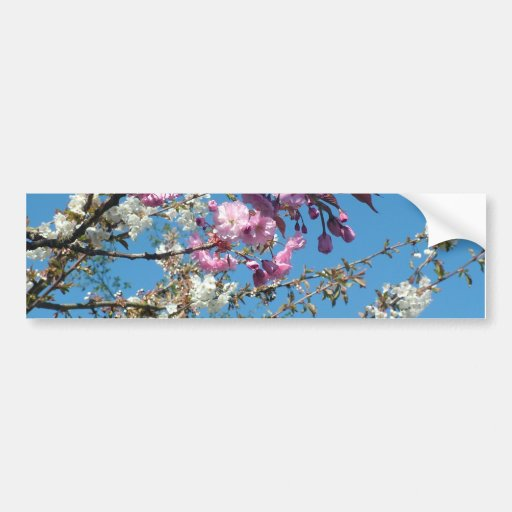 pink and white flowering cherry car bumper sticker