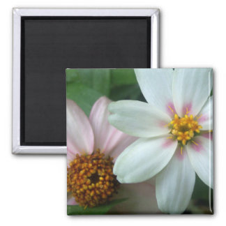 Pink and White Flowers 2 Inch Square Magnet