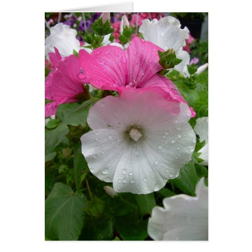 Pink and White Flowers Greeting Card