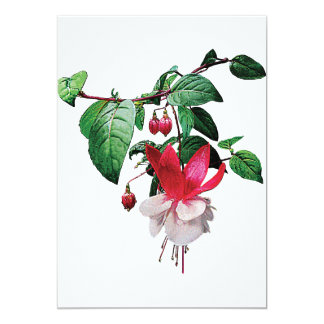 Pink and White Fuschia Card