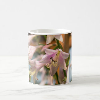 Pink and White Hosta Flowers in Bloom Photograph Classic White Coffee Mug
