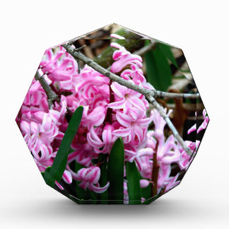 Pink and White Hyacinth Flowers Award