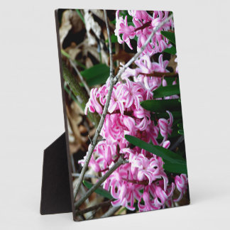 Pink and White Hyacinth Flowers Photo Plaque
