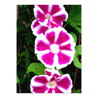 Pink and White Morning Glory Flowers 5.5x7.5 Paper Invitation Card