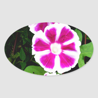 Pink and White Morning Glory Flowers Oval Sticker