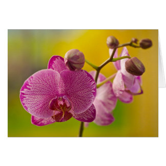 Pink and White Orchid Card
