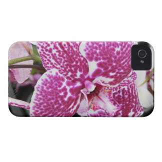 Pink and White Orchid iPhone 4 Case-Mate Case