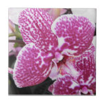 Pink and White Orchid Tile