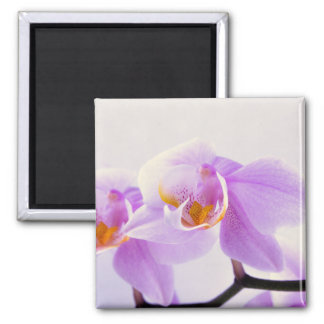 Pink and White Orchids Magnet