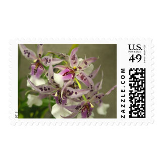 Pink and White Orchids Postage