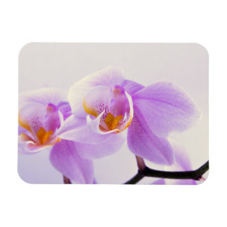 Pink and White Orchids Flexible Magnets