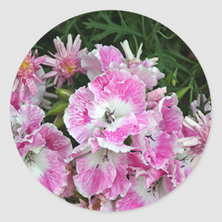 Pink and white pelargonium flowers classic round sticker