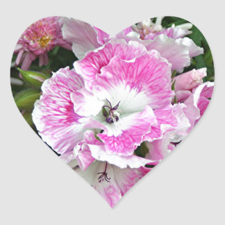 Pink and white pelargonium flowers heart sticker