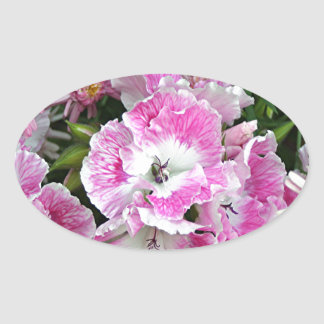 Pink and white pelargonium flowers oval sticker