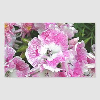 Pink and white pelargonium flowers rectangular sticker