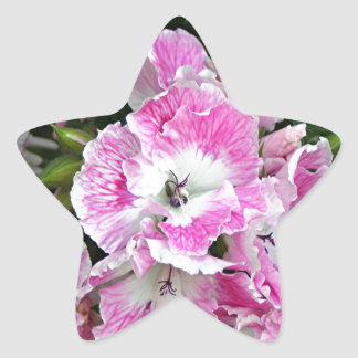 Pink and white pelargonium flowers star sticker