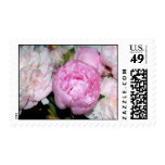 Pink and White Peonies Stamp
