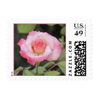 Pink and White Rose After the Rain Postage