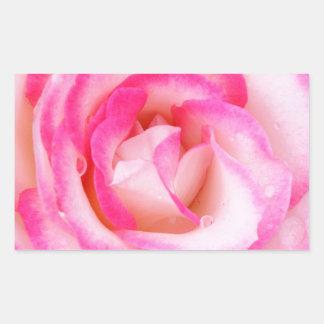 Pink and White Rose Close-up Rectangular Sticker