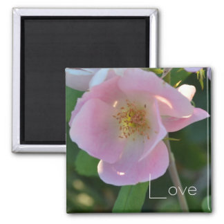Pink and White Rose Love Magnet