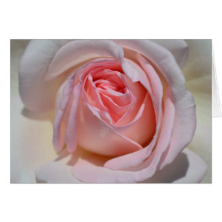 Pink and White Rose Note Card