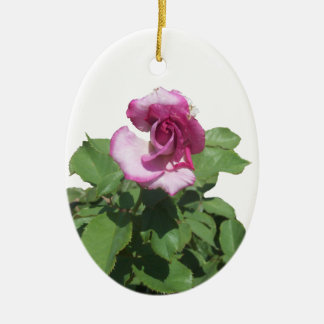 Pink and White Rose Oval Ornament
